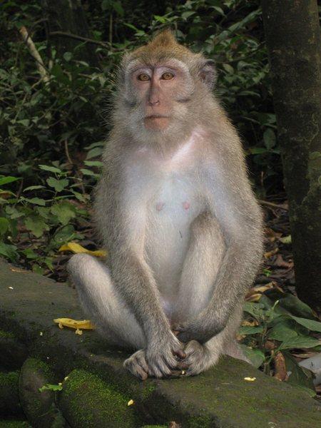 Bali Climber