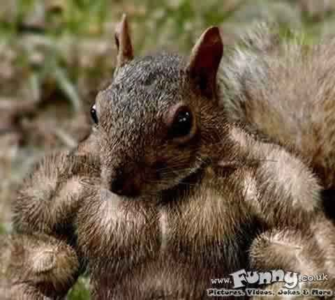 I allways wondered what I would look like as a squirrel