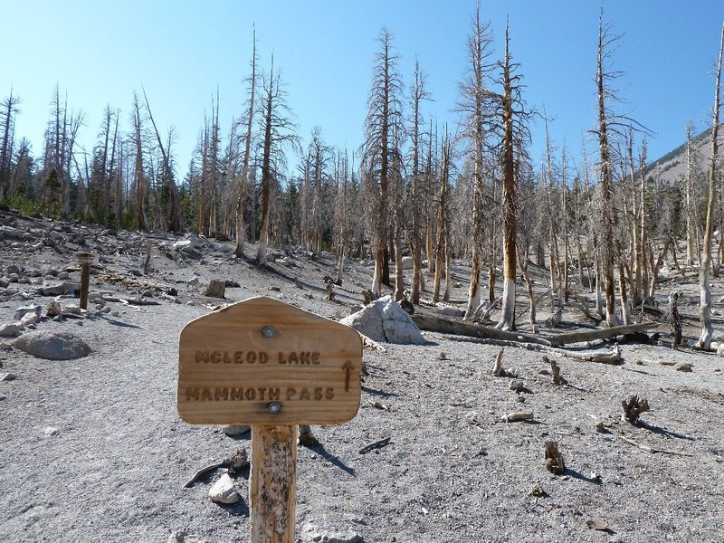 Trailhead sign for McLeod Lake, Mammoth Lakes Area