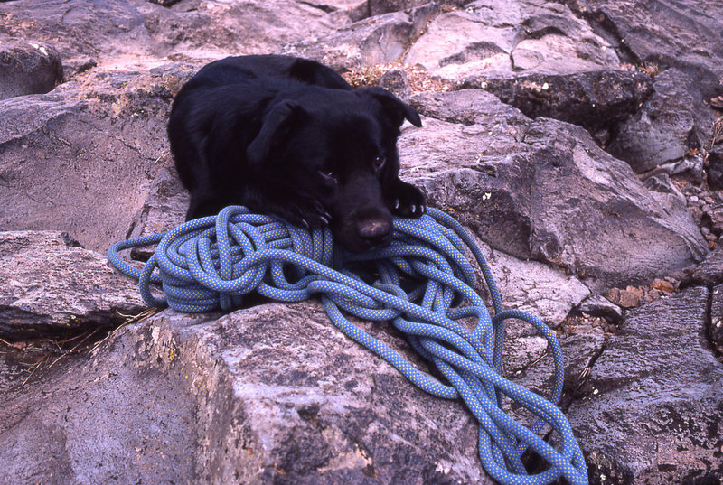 Rock Climbing Photo: Pika, the rope-dog guards the rope at the Cwm walk...