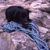 Pika, the rope-dog guards the rope at the Cwm walk down (remember the Edelrid Bavaria, 11.7 mm?).