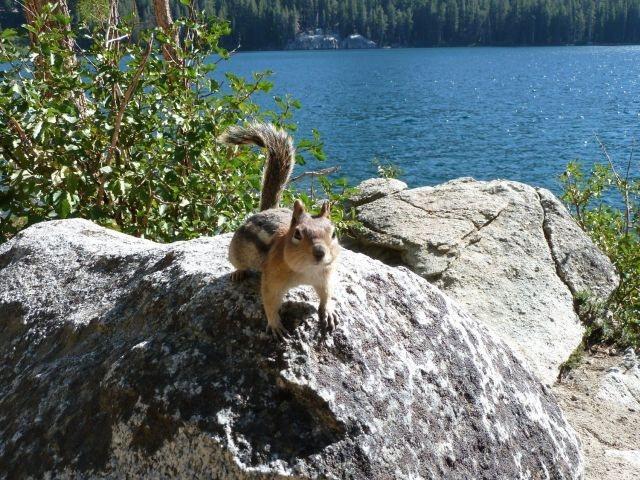A friendly local at Lake George, Mammoth Lakes