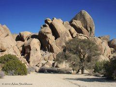 Rock Climbing Photo: The Live Oak