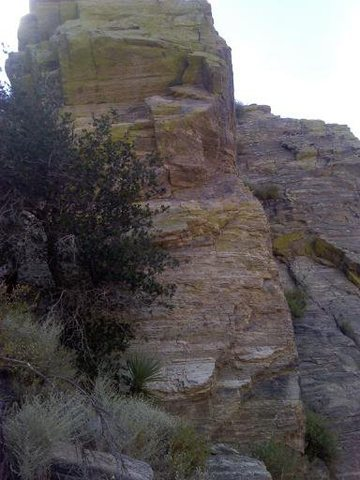 Rock Climbing Photo: Was climbing this today and I don't know what it i...