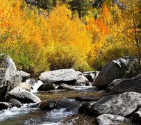 Rock Climbing Photo: Fall colors by a creek near Lake Sabrina