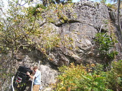 Rock Climbing Photo: Imagine this tree wasn't in the photo... and that'...