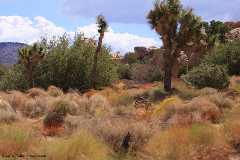 All the pretty colors of the native grasses and shrubs