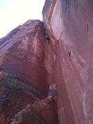 Rock Climbing Photo: Petrified Hornet, 5.10+, at the Petrified Hornet W...
