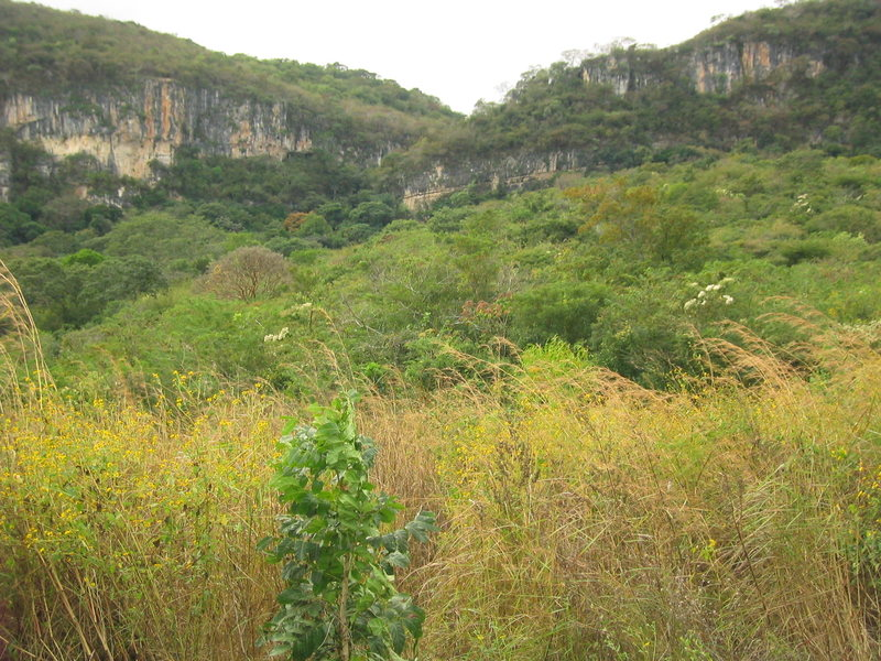 View of three of the main walls from the trail leading up to the base of the climbs. From left to right: La Terraza, La Ceiba, and El Jardin de la Profeta.