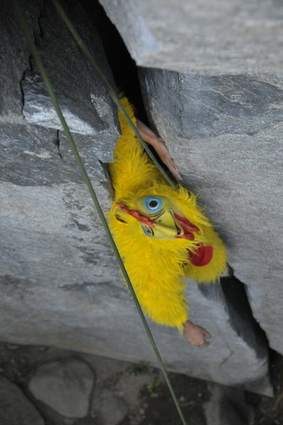 Rock Climbing Photo: Chicken throws some wings  Photo by Jacon