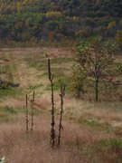 Rock Climbing Photo: Dryed out Milk Weed stalk Rozno's Meadow trail DL ...