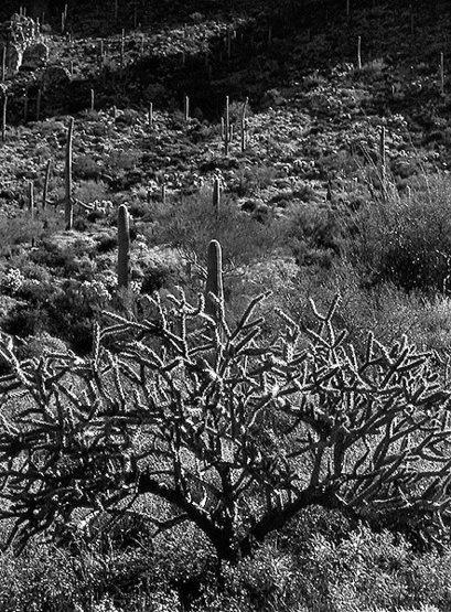 Sonoran Desert.<br> Photo by Blitzo.