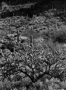 Rock Climbing Photo: Sonoran Desert. Photo by Blitzo.