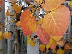 Rock Climbing Photo: Fall colors, North Lake