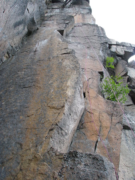 "The line of ""Owliola"" 10a"