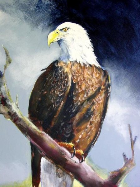 Rock Climbing Photo: The Bald Eagle, a noble and majestic bird of prey.