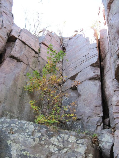 "Rock Climbing Photo: Behind the tree is ""Clostomy""."