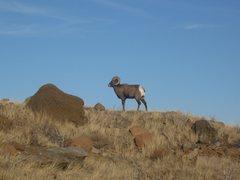 Rock Climbing Photo: Cody