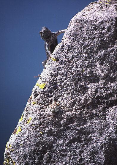 Rock Climbing Photo: These guys can still climb Cave Rock. Photo by Bli...