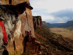 Rock Climbing Photo: Barley checking out the action at the Way Rambo Wa...