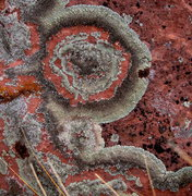Rock Climbing Photo: Lichen