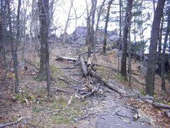 Rock Climbing Photo: Some down trees on the East Bluff trail.  Strong w...