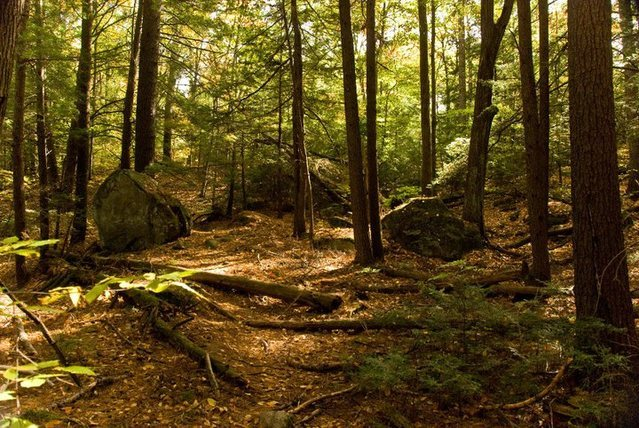 The unique forest around the Swirley Boulder.<br> <br> Photo by Seth Hamel.