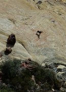 Rock Climbing Photo: Bighorn stopping at the base of Armatron to check ...