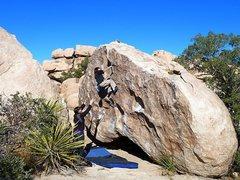 Rock Climbing Photo: Jessica near the top of Chuckawalla (V1), Joshua T...