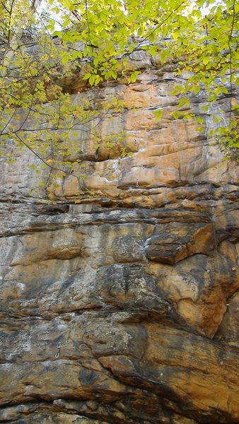 Rock Climbing Photo: Got Cottonmouth?