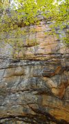 Rock Climbing Photo: Got Cottonmouth?