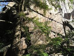 Rock Climbing Photo: Looking through the brush