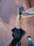 Rock Climbing Photo: Moxie has no interest in Supercrack