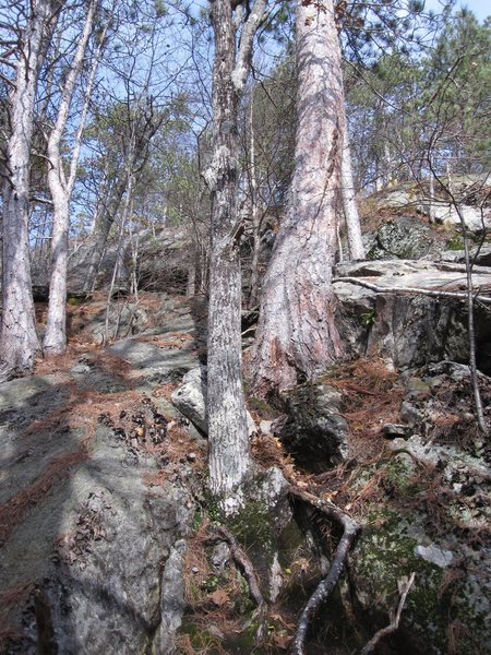 The start to the climb is the gray schist bottom left  and higher up directly right of the tree trunk is the Quartzite ramp and the climb goes up from there.