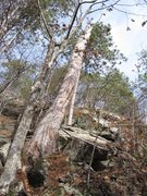Rock Climbing Photo: This shows the tree trunk without a tree top. The ...