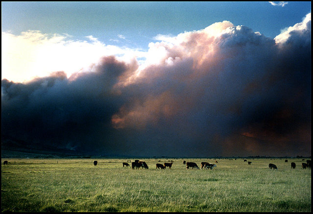 Smoke from the 1996 Kingsbury Grade Fire, blowing across Carson Valley.<br> Photo by Blitzo.