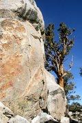 Rock Climbing Photo: Stellar rock and good views at Onyx Summit