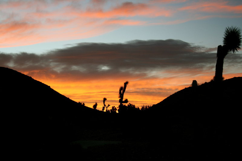 Rock Climbing Photo: Sunrise Joshua Tree style.