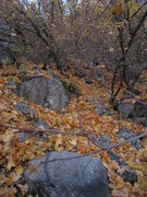 Rock Climbing Photo: Fall foliage during approach from the east.  Like ...