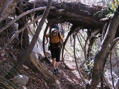 Rock Climbing Photo: Cochise approach...