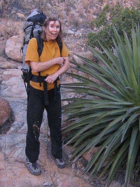 Cochise foliage