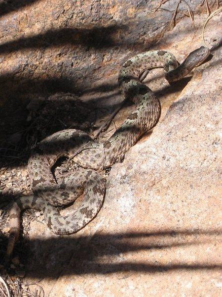 Rock Climbing Photo: Cochise buddy