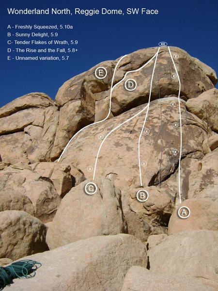 Rock Climbing Photo: JTNP, Wonderland North, Reggie Dome, SW Face (upda...