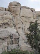 Rock Climbing Photo: Bambi Meets Godzilla (5.8) Joshua Tree NP, Echo Ro...