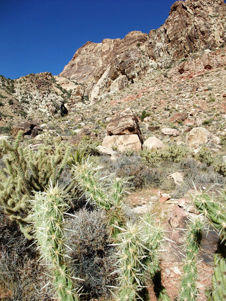 Rock Climbing Photo: one of the many unfriendly plants on the approach