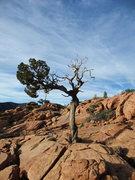 Rock Climbing Photo: perfect summit lighting