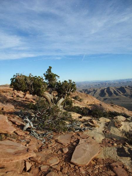 Rock Climbing Photo: more Windy Peak summit porn