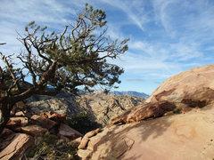 Rock Climbing Photo: yet another summit shot