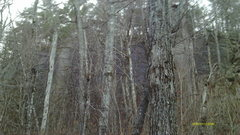 Rock Climbing Photo: The Slab Wall throught the trees