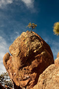 Rock Climbing Photo: Distant Dancer.